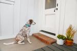 Дверцы для собак